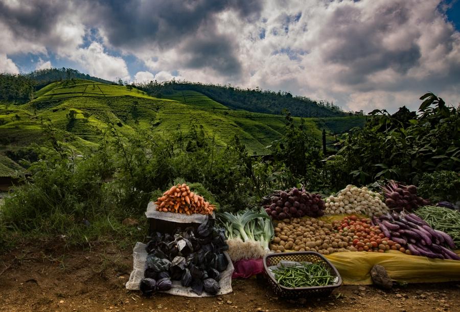 Sri-Lankassa, teen maassa